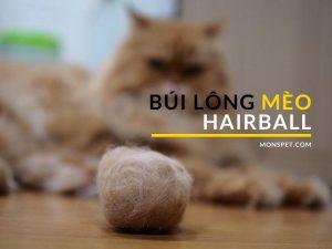 """Cách phòng ngừa và điều trị Búi lông """"Hairball"""" của mèo"""