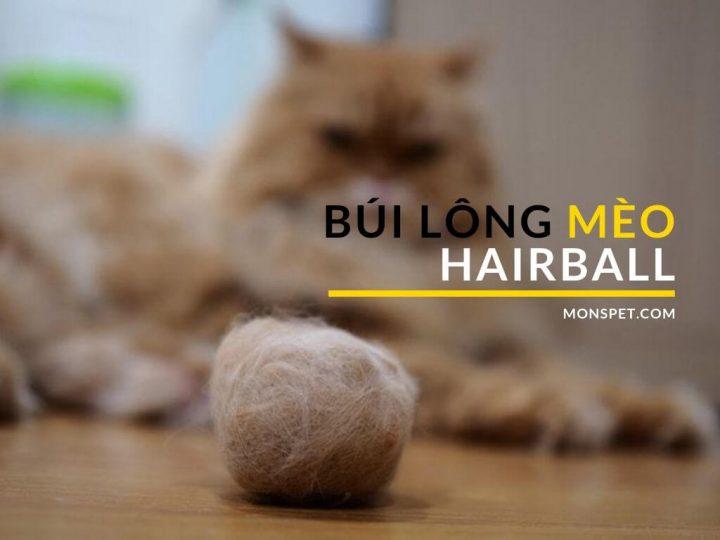 Búi lông mèo hairball
