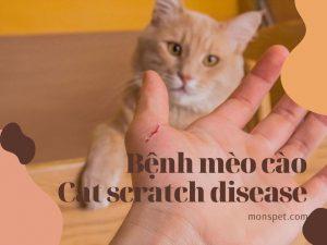 Tất tần tật về Cat scratch disease – Bệnh mèo cào