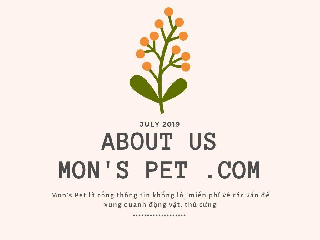Monspet.com là gì?