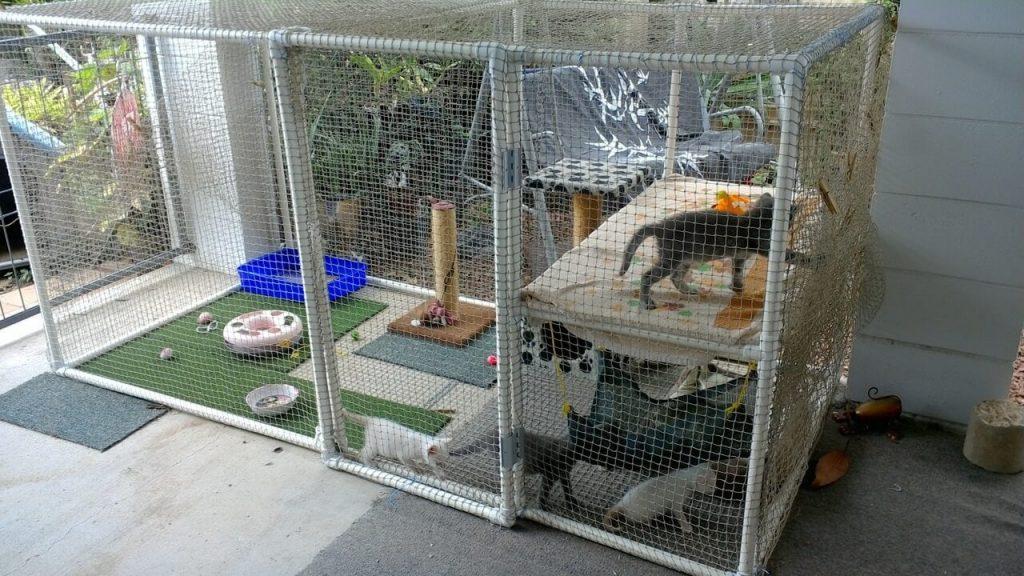 Trại nuôi nhốt mèo chung có nguy cơ lây nhiễm FeLv