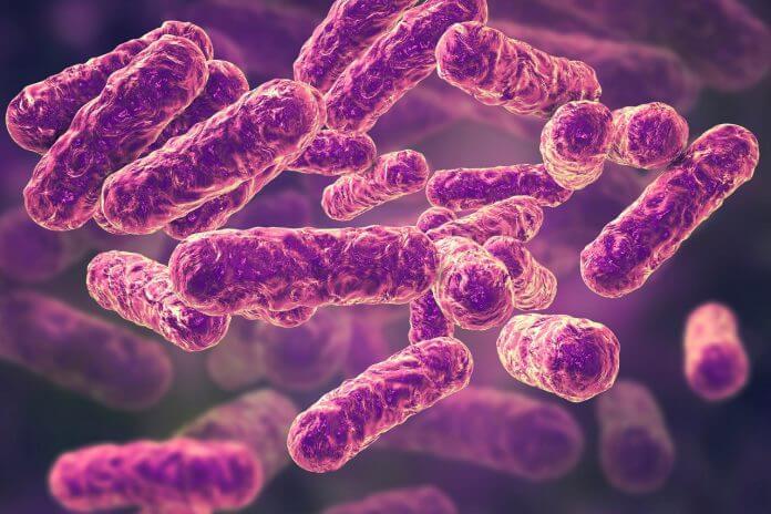 Vi khuẩn Bartonella Henselae