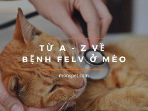 Virus gây bệnh leukemia – bệnh bạch cầu ở mèo (FeLV)