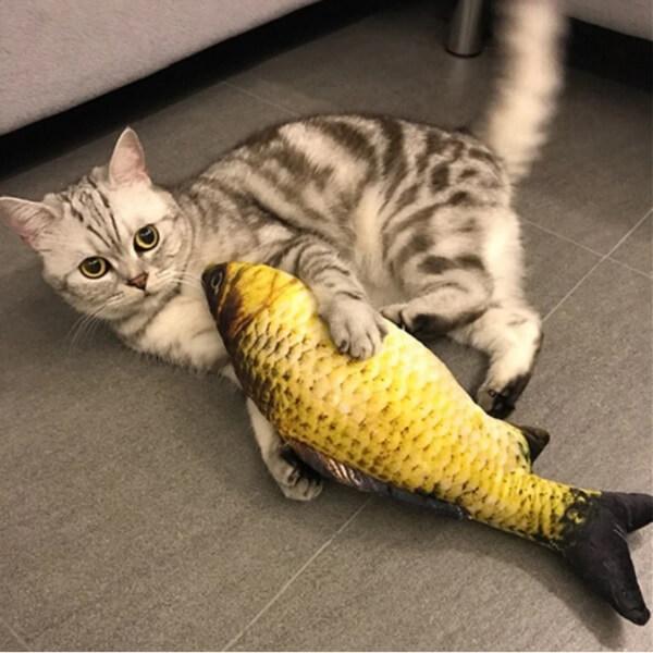 Cá nhồi catnip
