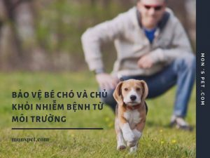 Những cách bảo vệ chó và chủ nuôi khỏi bị nhiễm bệnh từ môi trường!