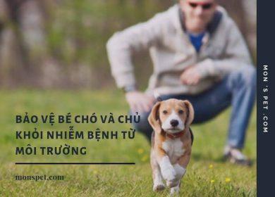 Những cách bảo vệ chó và chủ nuôi khỏi bị nhiễm bệnh từ môi trường 2019 !