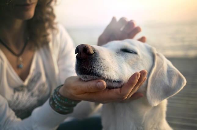 18 biện pháp bảo vệ chó