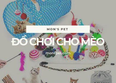 Từ A – Z về đồ chơi cho mèo | Top 10 món đồ không thể thiếu 2019