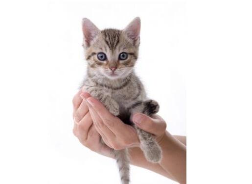 Cách bế mèo
