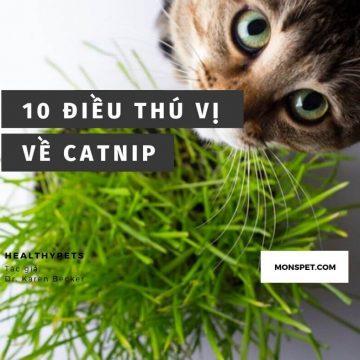 Catnip là gì? Cỏ mèo là gì?