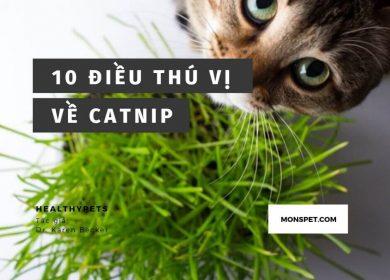 10 Điều thú vị về Catnip (Cỏ mèo) | Có thể bạn chưa biết | 2019
