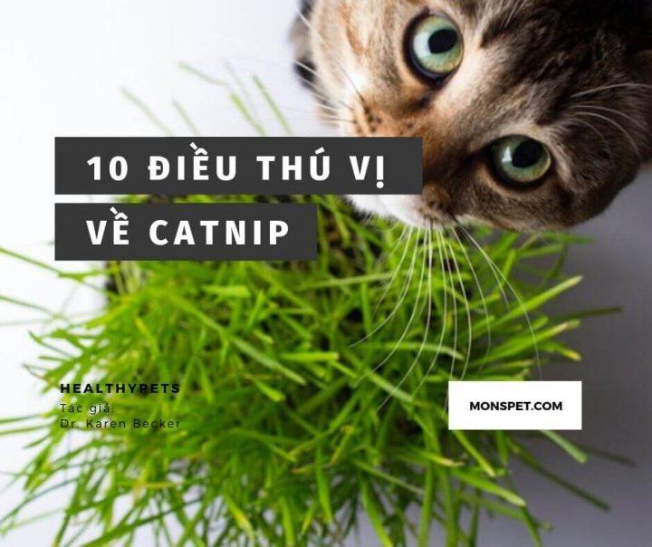 10 Điều thú vị về Catnip (Cỏ mèo) | Có thể bạn chưa biết | 2020