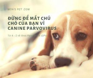 Đừng để mất chú chó của bạn vì Canine Parvovirus | Virus Parvo ở chó (CPV)