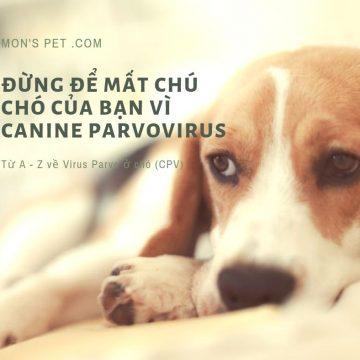 Đừng để mất chú chó của bạn vì Virus Parvo