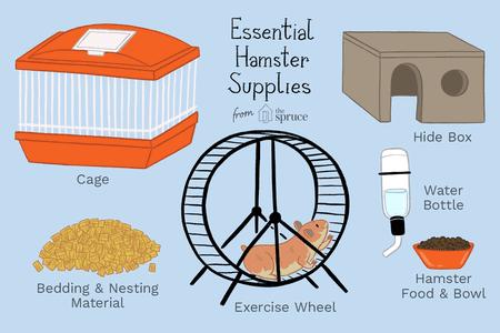 Những gì bạn cần khi chăm sóc hamster