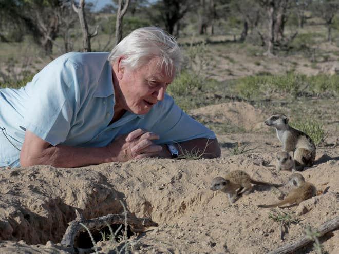 Ở tuổi 92, Attenborough tiếp tục vượt qua các giới hạn