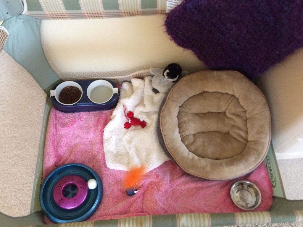 Set up chỗ ở cho mèo nhỏ