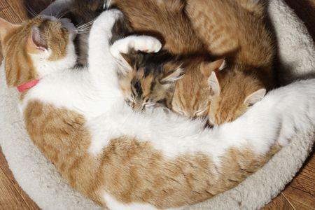 Thời điểm cai sữa của mèo