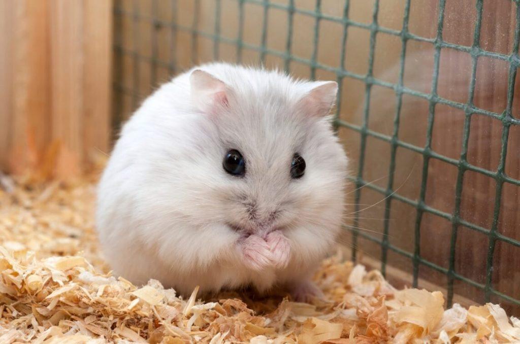 Vật liệu làm ổ cho hamster