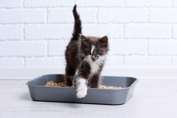 Khay vệ sinh cho mèo nhỏ
