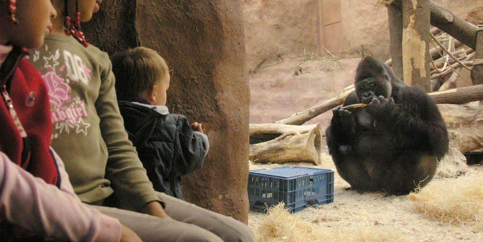 Richard, một con khỉ đột trong vườn thú Prague, xuất hiện trong một chương trình truyền hình thực tế cùng với hai con cái. Công chúng được yêu cầu bỏ phiếu cho con khỉ đột yêu thích của họ