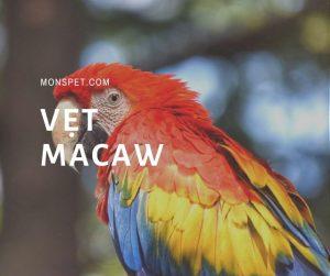 Từ A – Z về loài vẹt Macaw và 5 sự thật về chúng