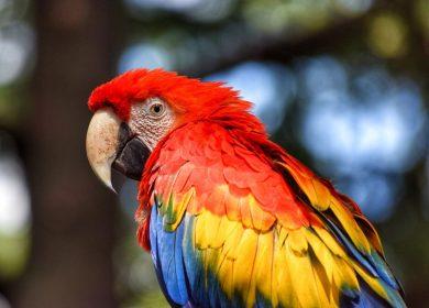 Từ A – Z về loài vẹt Macaw và 5 sự thật về chúng 2019