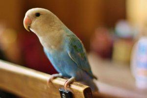 Cách nhận biết các bệnh thường gặp ở những con chim nuôi trong lồng