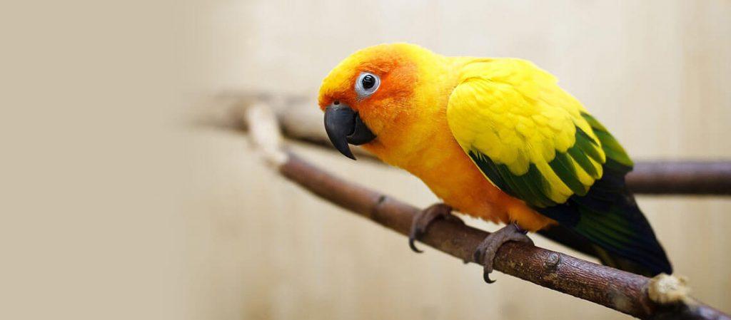 Dấu hiểu của 1 con chim khỏe mạnh