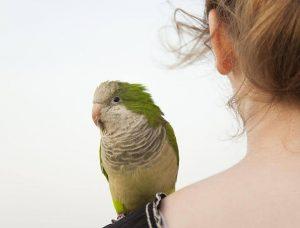 Từ A – Z về bệnh Giardia ở chim cảnh