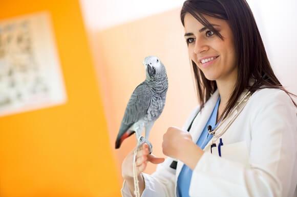 Bệnh Giardia ở chim có thể điều trị