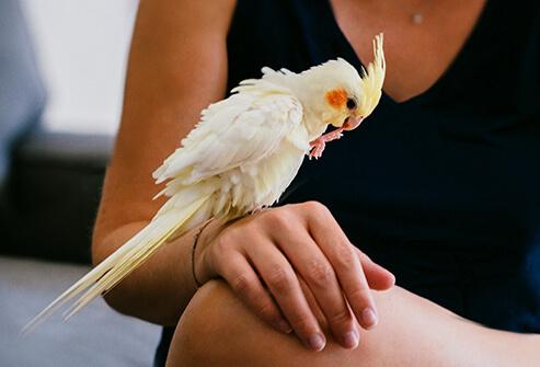 Chuẩn đoán bệnh Giardia ở chim