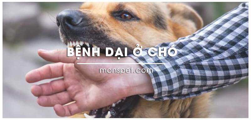 Bệnh dại ở chó