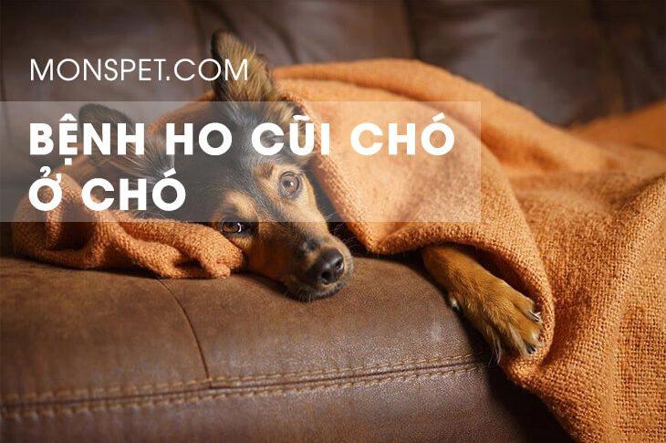 Bệnh ho củi ở chó