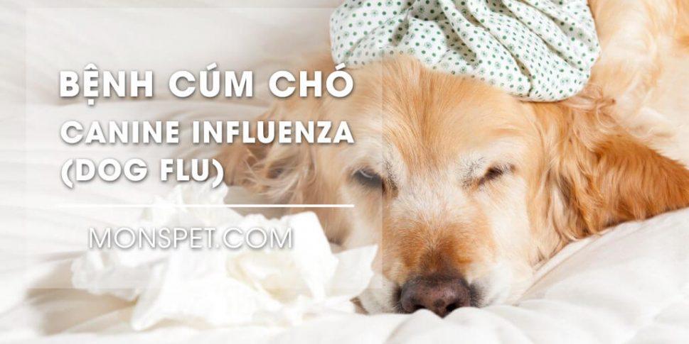 Bệnh cúm chó