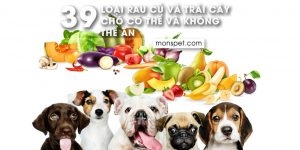 39 Loại Rau Củ Và Trái Cây Chó Có Thể Và Không Thể Ăn