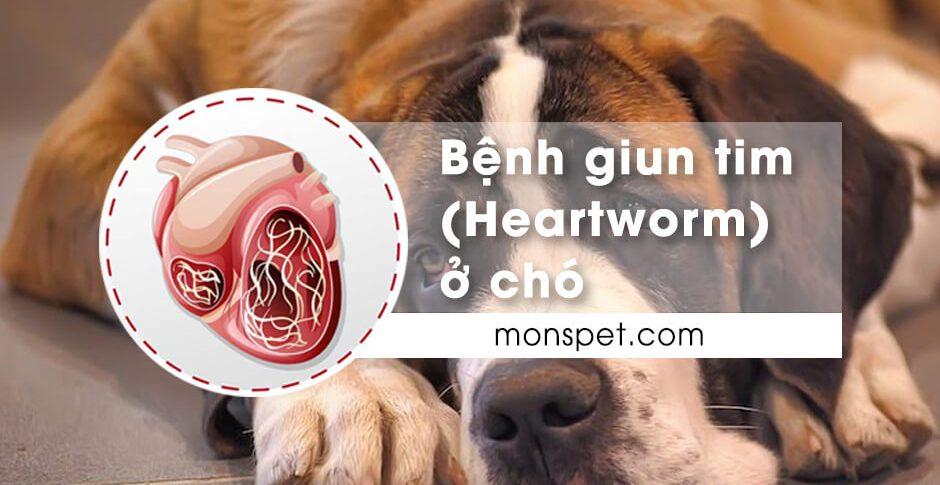 Bệnh giun tim ở chó (Heartworm)