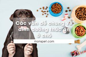 Các vấn đề chung về dinh dưỡng thức ăn cho Chó