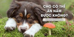 """Từ A – Z về vấn đề """"Chó có thể ăn Nấm được không?"""""""