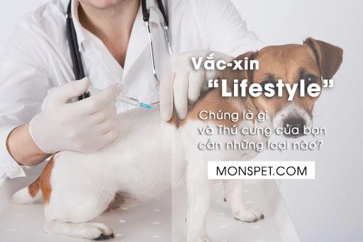 vắc xin lifestyle cho chó mèo là gì? Thú cưng cần những loại vắc xin nào?