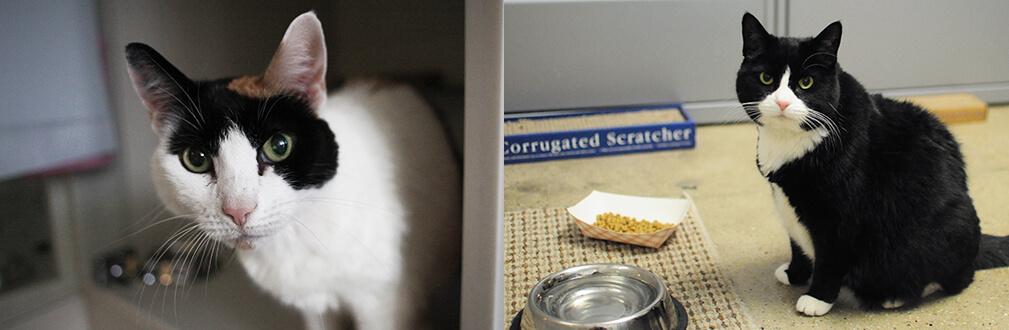 Cách chăm sóc cho mèo lớn tuổi