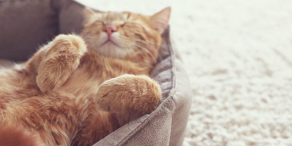 Nệm ngủ cho mèo
