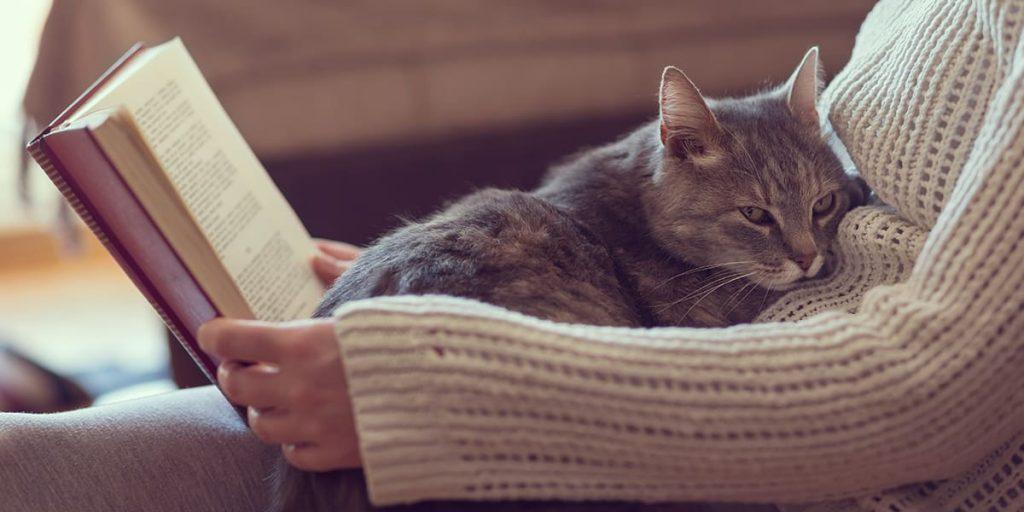 Lời khuyên để có một ngôi nhà thân thiện với mèo