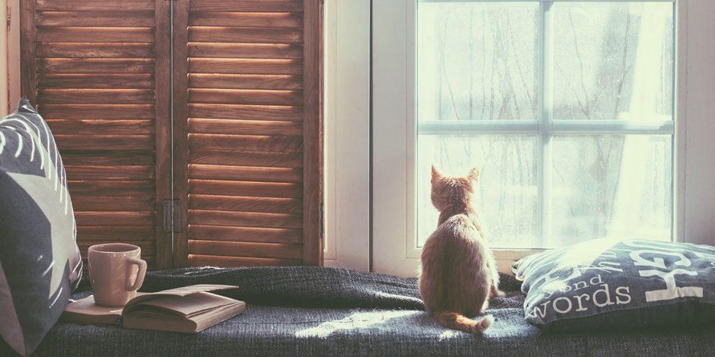 Cung cấp 1 ngôi nhà hoàn hảo thân thiện với mèo