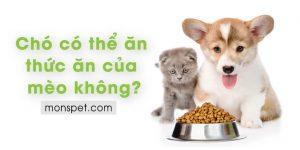 Chó có thể ăn thức ăn của mèo không?