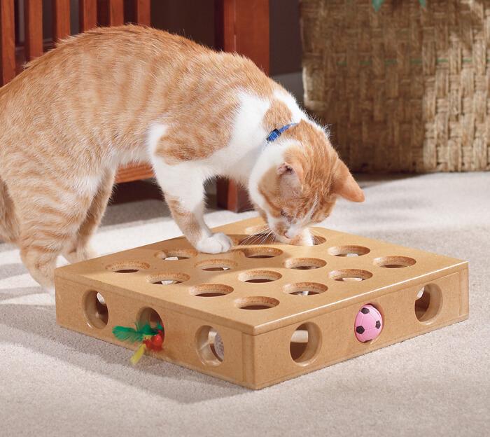 Thay đổi môi trường của mèo bằng cách cho mèo ăn puzzle feeeders hoặc chơi để chuyển hướng chú ý của mèo | Giảm bớt wool-sucking ở mèo, giảm hành vi bú mút chăn len