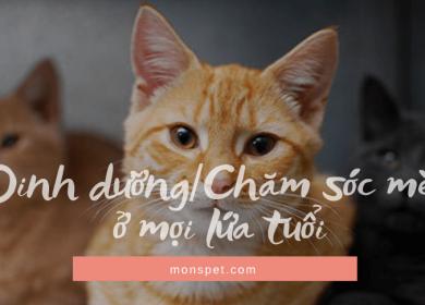 Dinh dưỡng | Cách chăm sóc mèo ở mọi lứa tuổi