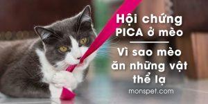 Hội Chứng PICA ở mèo | Vì sao mèo ăn những vật thể lạ?