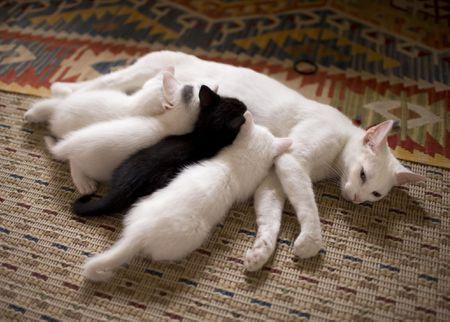 Khi nào nên cai sữa cho mèo con