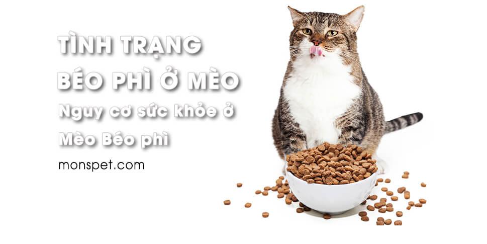 Tình trạng béo phì ở mèo